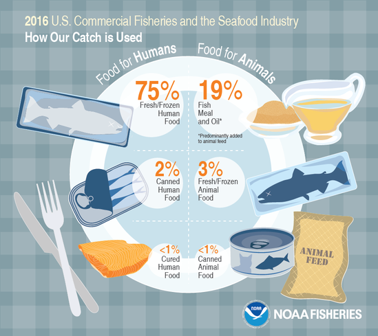 Infographic showing how U.S. commerical fisheries products are used, for the year 2016