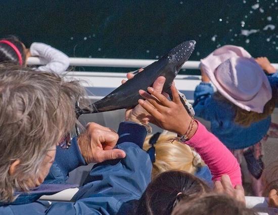 750x500_humpback whale toy_NOAA.jpg