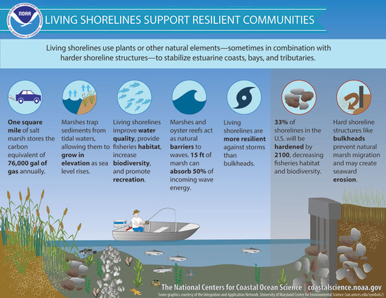living-shorelines-infographic.jpg