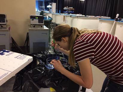 Scientist using lab equipment.