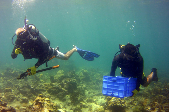 Two divers underwater, one holding a blue plastic crate