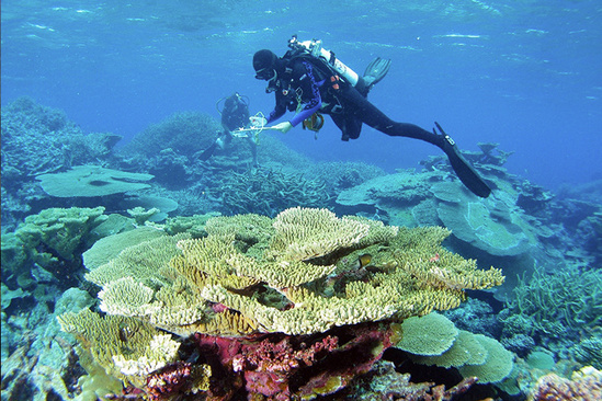 Scientist monitoring coral reef in the Pacific Remote Islands Marine National Monument.