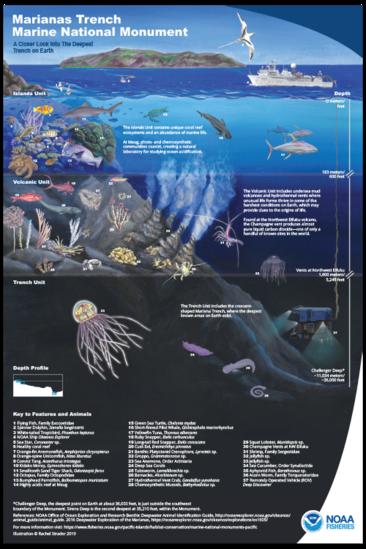 500x750-mtmnm-edu-poster-with-key-th-rachel-strader-NOAA-PIRO.png