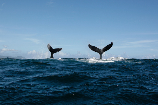 750x500-whale-tails-shutterstock-533230429.jpg