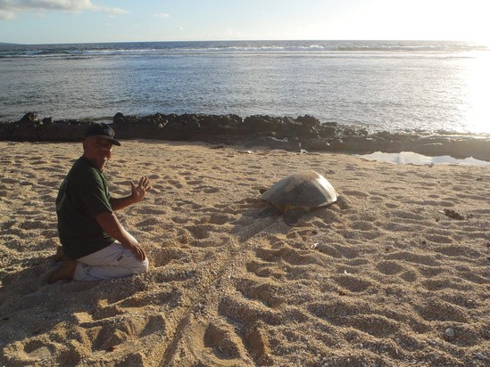 Joseph Ruak, CNMI Department of Lands and Natural Resources staff, ensures that turtles depart safely after long nights spent laying eggs on nesting beaches in Saipan.
