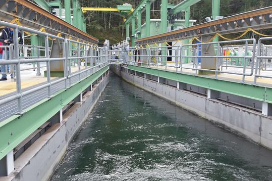 Fish Migration Clackamas Hydropower Webstory 2 3x2.jpg