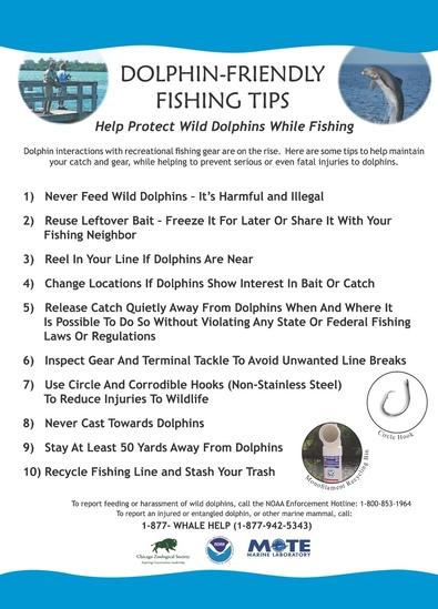 dolphins_friendly_fishing_tips.jpg
