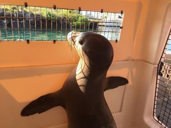 960x720-Hawaiian-monk-seal-pup-rescued.jpg