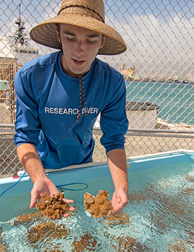 386x500-MOP-Jake-Reichard-holds-two-pieces-of-harbor-coral_NOAA-PIRO.jpg