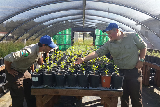 Ca Vet Corps Veterans Rob Slack and John Herzog Native Plant Propagation Nursery.jpg