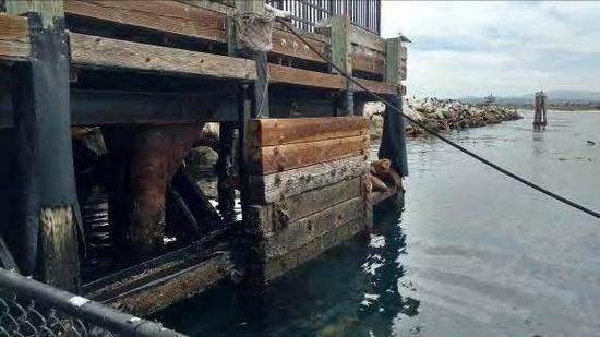 Photo of pier