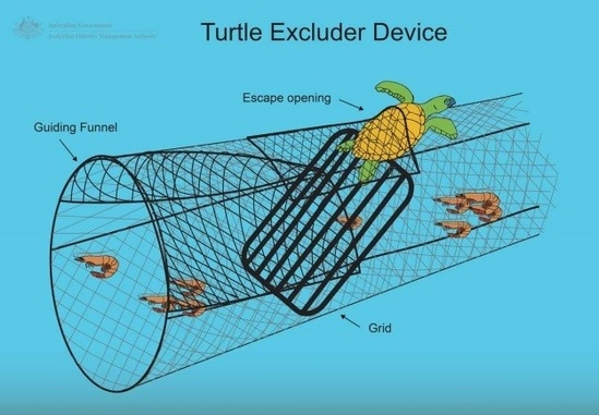 Image of a turtle excluder device