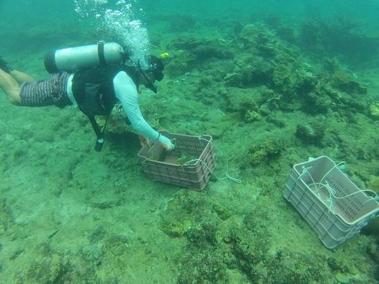 coral photo 4.jpg