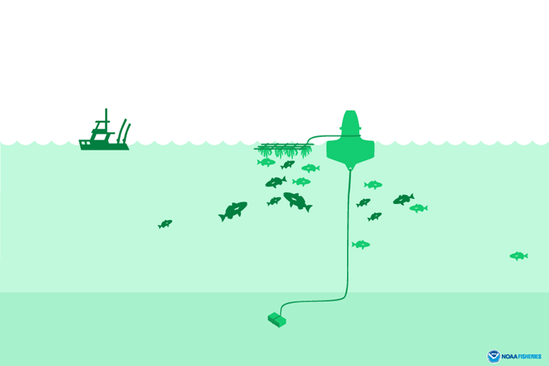 Fish aggregating device illustration