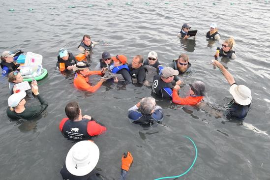 Dolphin Disentangle April 2019 workup.jpg
