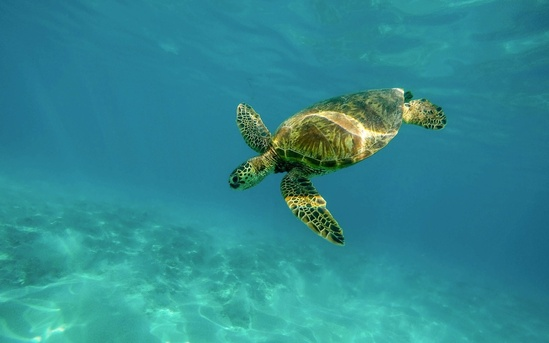 1280x800-turtle-pixabay-flipped-CC0.jpg