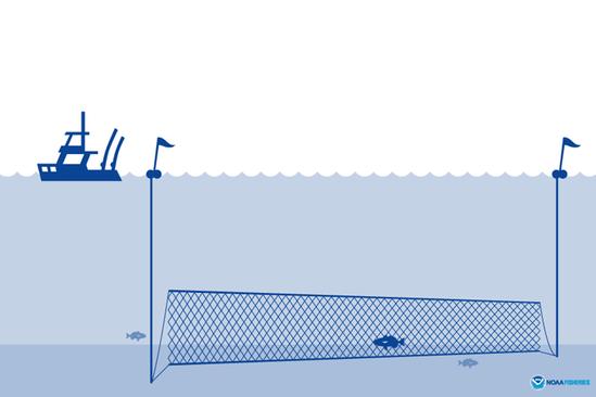 Gillnet illustration