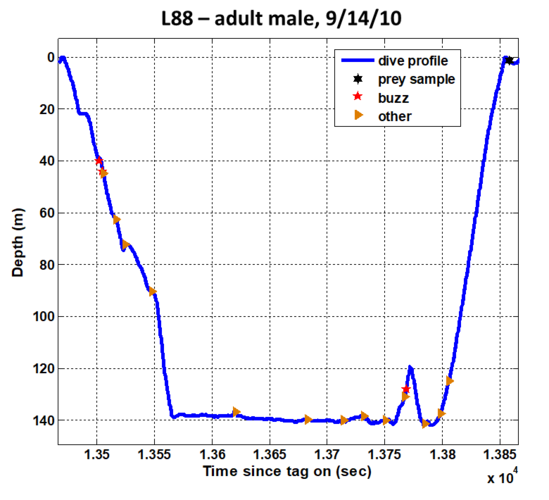 Line graph showing hunting dive profile