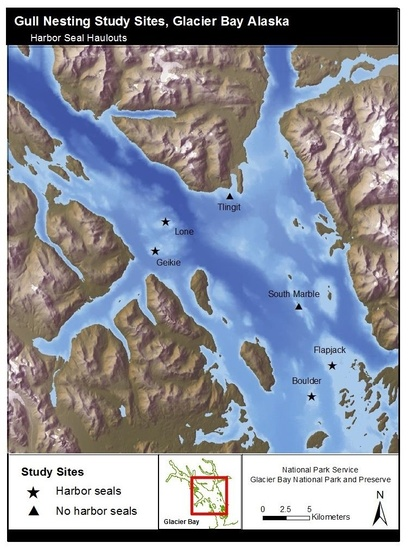 Map of gull nesting sites and harbor seals