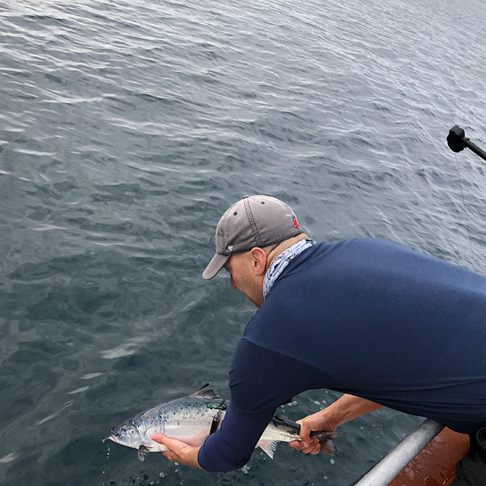 Research fisheries biologist returns an Atlantic salmon tagged with a special satellite tag back to the water.