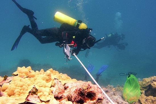 750x500-dive-work-II-NOAA-PIFSC.jpg