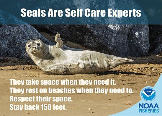 Seals social distance_700x500.jpg