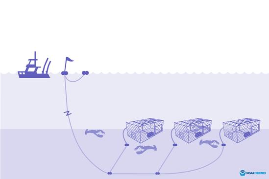 Illustration of traps/pots.