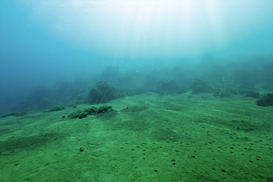 Carbon dioxide (chemical formula CO 2)bubbling from seafloor in CNMI.
