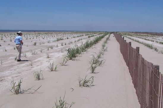 natural infrastructure barataria barrier island restoration 3.jpg