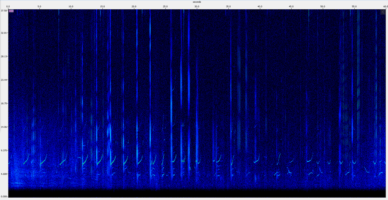 A spectrogram, or visual image, of echolocation clicksand whistlesfrom false killer whales.