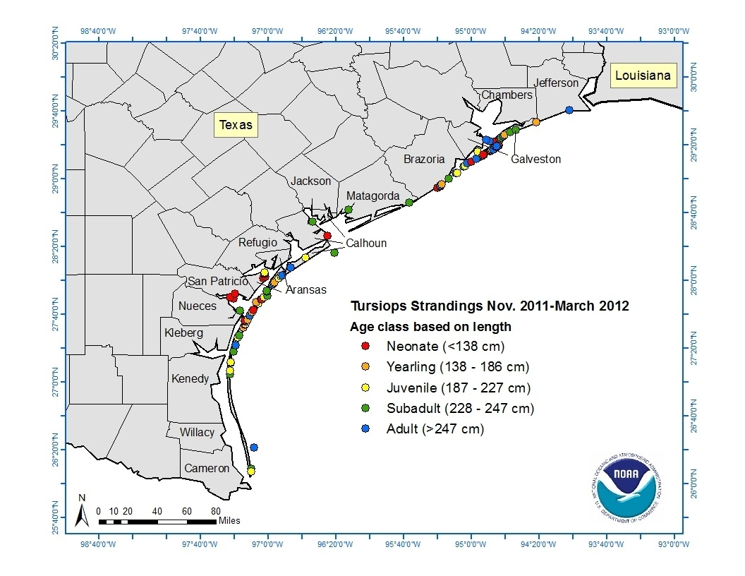 Map of bottlenose dolphin strandings in Texas from November 2011 through March 2012.