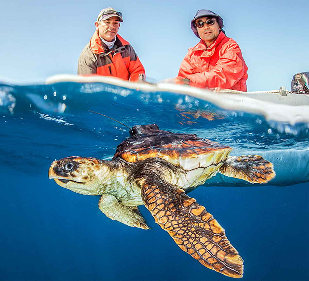 First-ever loggerhead turtle tagged off the U.S. West Coast