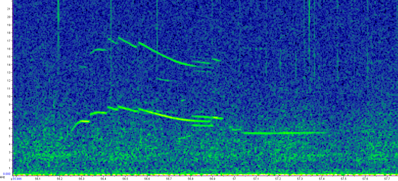"""A spectrogram of """"stepped"""" whistles made from rough-toothed dolphins."""