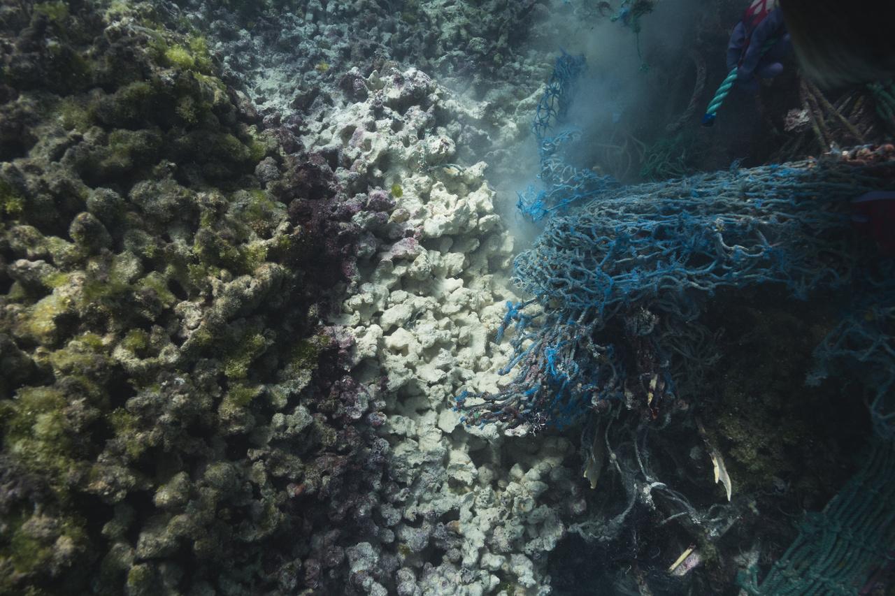 2018.10.19-Coral-Reef-Scar-StevenGnam.jpg
