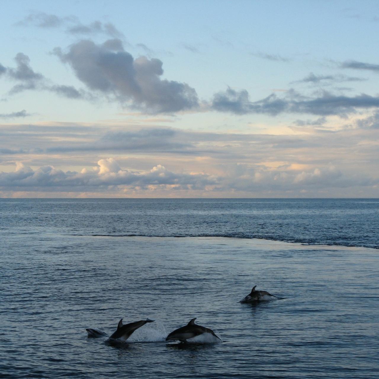 250x250-dolphins-Pacific-Ocean.jpg