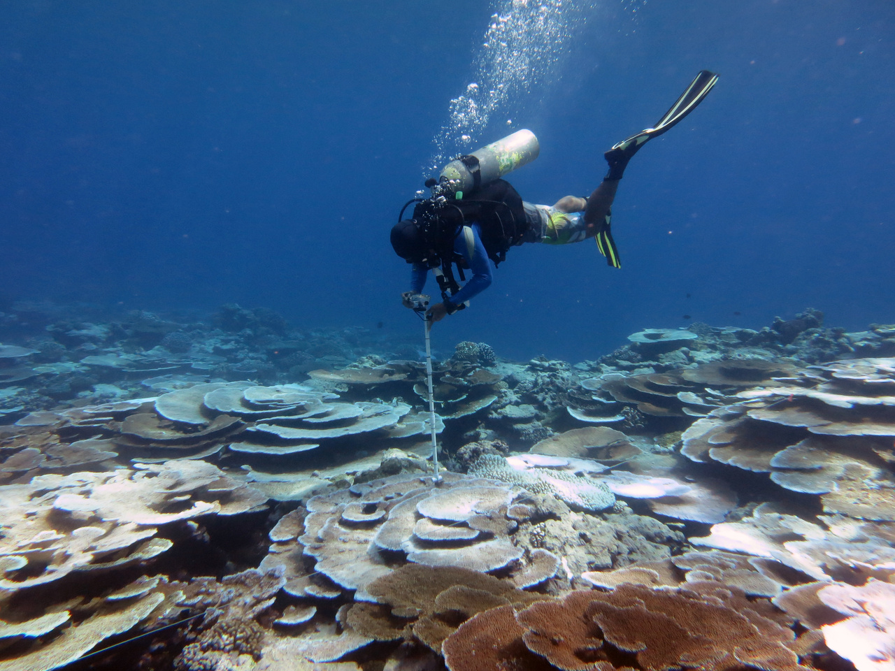 Diver conducts survey of bleached corals at Tutuila Island in American Samoa