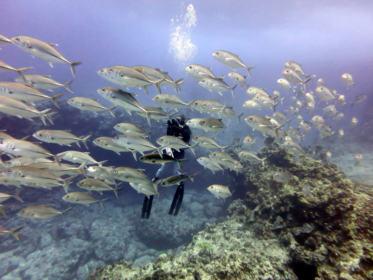 Diver conducts underwater fish survey