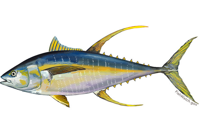Species Illustration