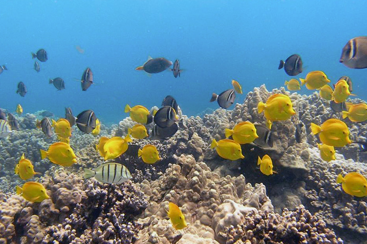 Reef fish near coral underwater.