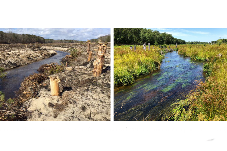 restoration project on coonamesset river in falmouth