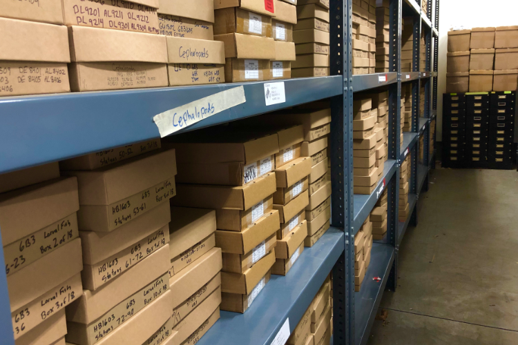 sorted samples in boxes on shelves in the nefsc plankton archive by katey marancik