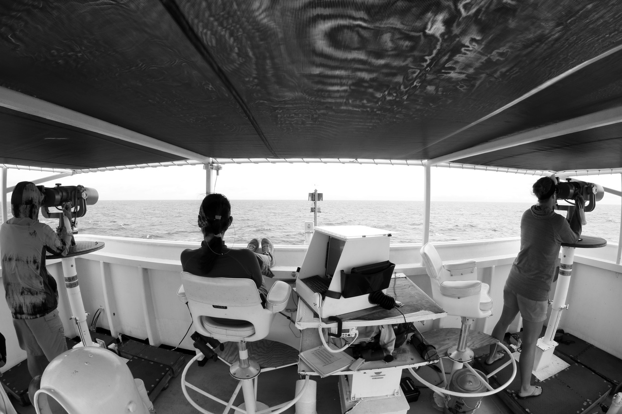 While on-effort, three visual observers continuously search for cetaceans: two search using big-eye binoculars, and one uses the naked eye and hand-held binoculars and entersdata as needed.