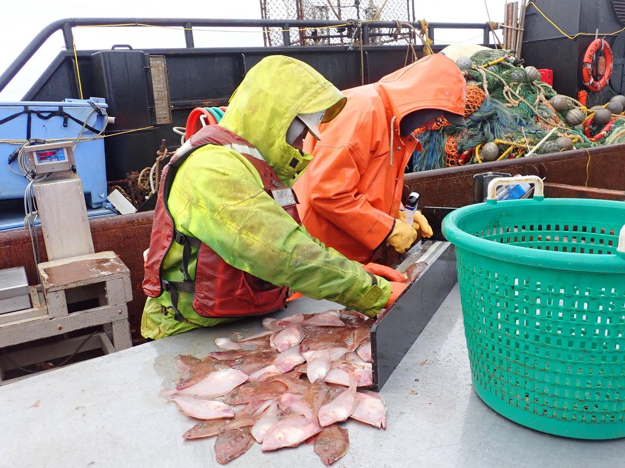 Adult-GF-Crab-Bottom-Dwelling-Species_Survey-SEBS_Continental-Shelf_3.JPG