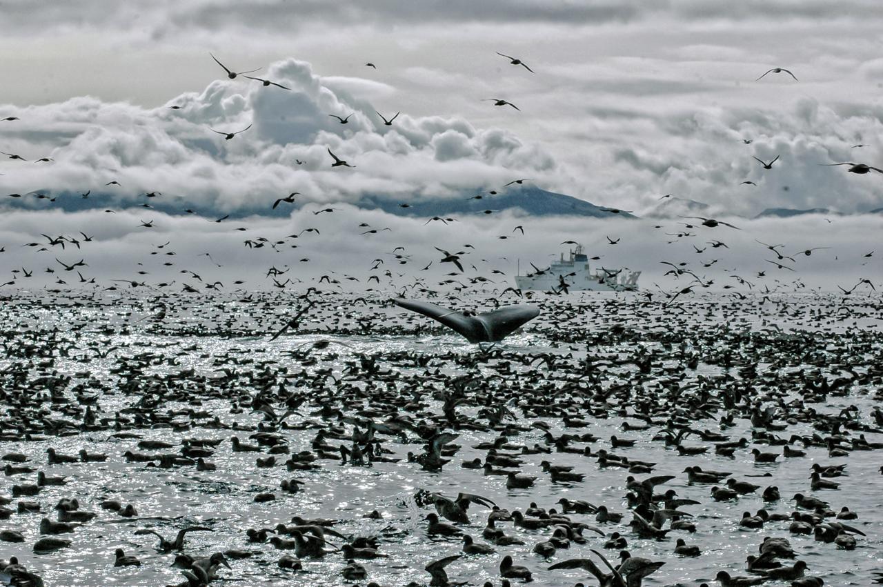 Alaska Aleutian Islands