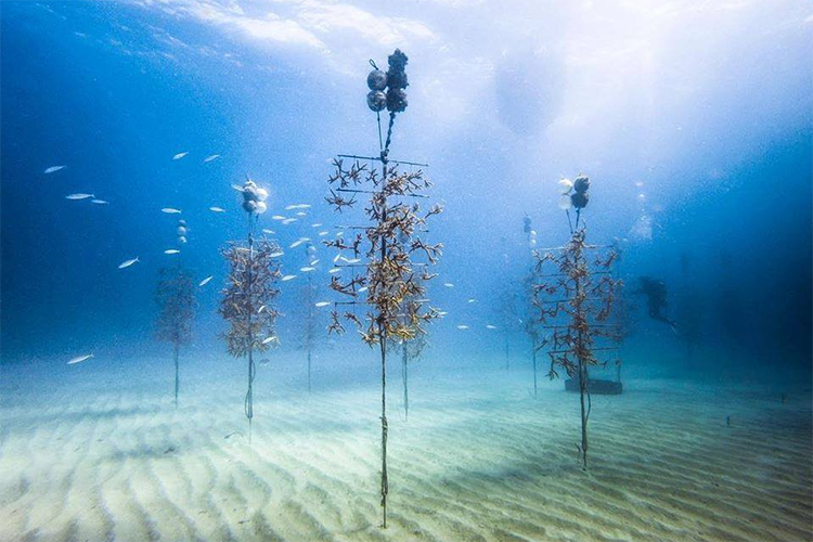 Underwater pillars rest in the sand with young corals growing on them