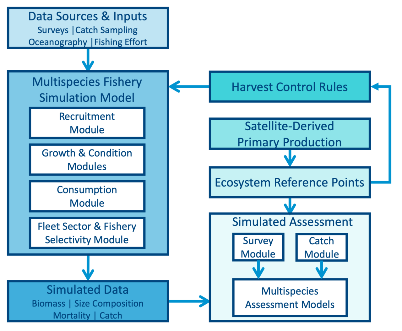 A flowchart showing data inputs to the simulation model, simulated data generated and input to the simulated management module, and outputting ecosystem reference points (also informed by satellite derived primary production). Multispecies status relative to reference points is fed into a harvest control rule, which determines how much simulated catch to take from the simulation model in the next year. Then the process repeats.
