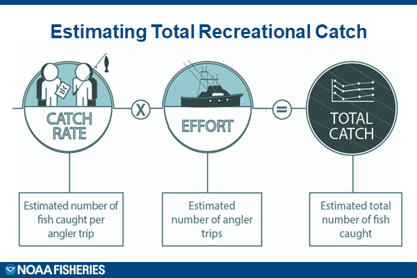 A diagram depicting the process used to estimate total recreational catch.