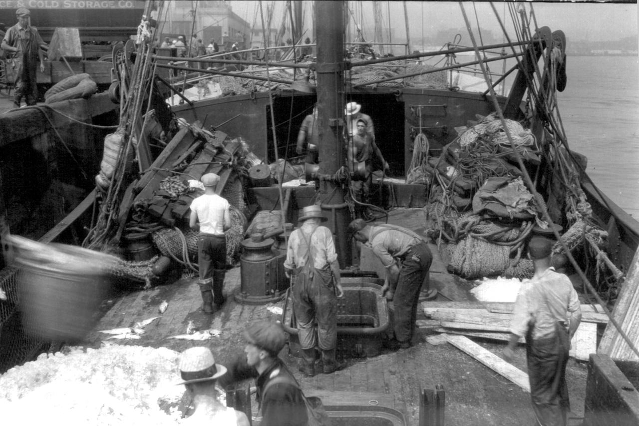 Fishermen working with haddock catch.