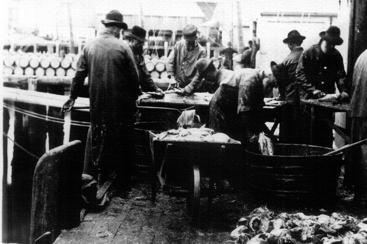 Men gutting and processing cod for salting most likely. Barrels for fish in background
