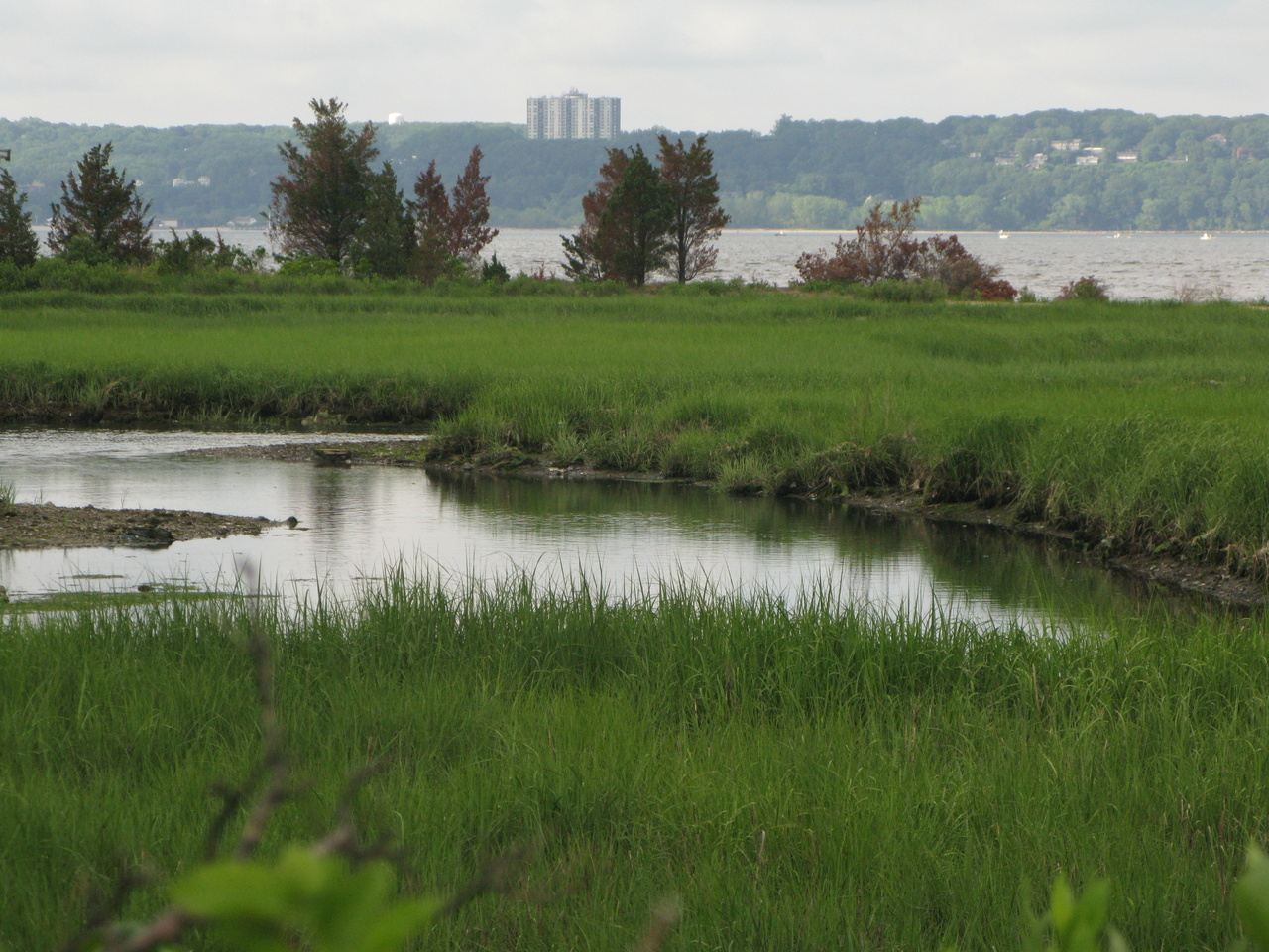 wetland habitat with water and green grasses